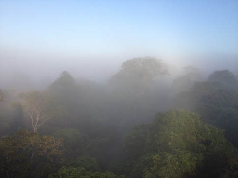canopy view of La Selva